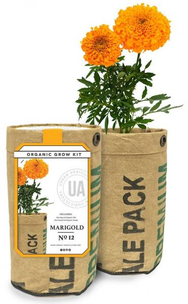 Marigold Grow Kit